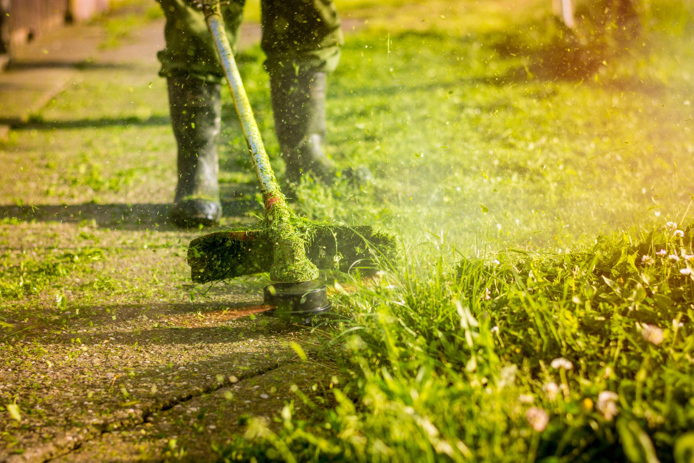 Manutenzione aree verdi trieste